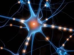Le basi neurofisiologiche dell'intersoggettività